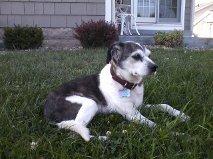 pup, June 12, 2012